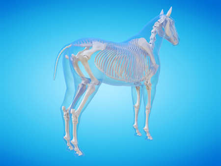 3d rendered medically accurate illustration of a horse skeleton Stockfoto - 121704410