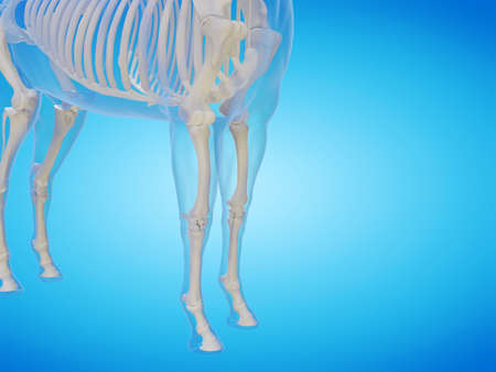 3d rendered medically accurate illustration of a horse skeleton