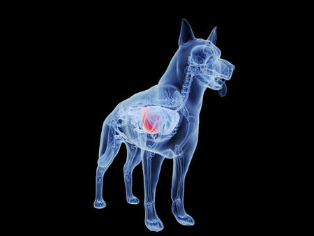 3d rendered medically accurate illustration of the dogs liver Standard-Bild - 121704995