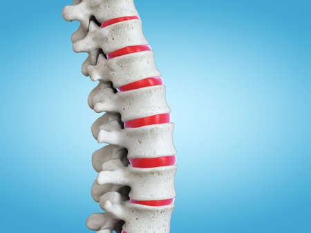 3d rendered medically accurate illustration of the human spine Stockfoto