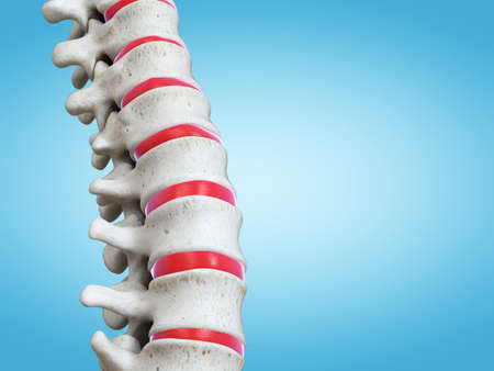 3d rendered medically accurate illustration of the human spine Stock Photo