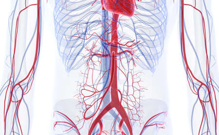 3d rendered medically accurate illustration of the abdominal blood vessels Stock Photo