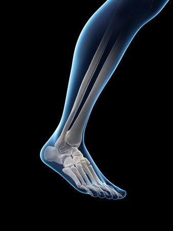 3d rindió la ilustración médicamente exacta de un tobillo doloroso Foto de archivo