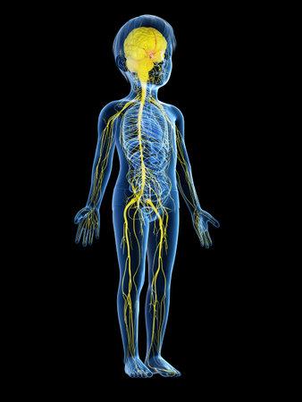 Rendu 3D illustration médicalement précise d'un système nerveux de l'enfant