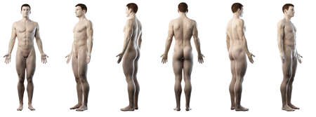 3d rendered medically accurate illustration of a healthy man