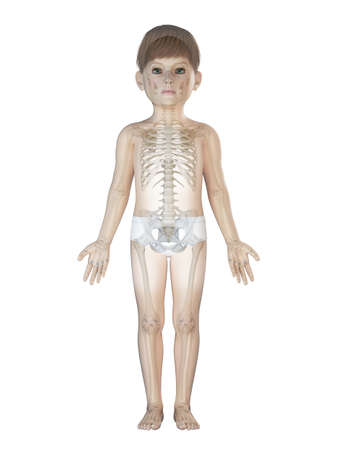 3d rendered medically accurate illustration of a childs skeleton
