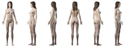 3D-gerenderde medisch nauwkeurige illustratie van een gezonde vrouw