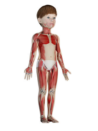 3d rendered medically accurate illustration of a childs muscle system