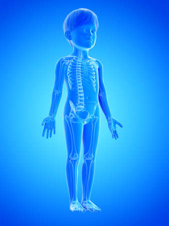 3d rendered medically accurate illustration of a childs skeleton Stock Illustration - 122505563