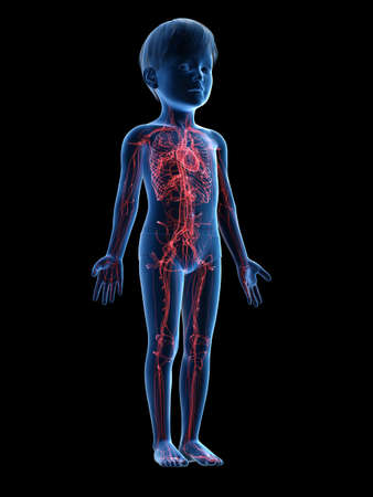 Médicalement en rendu 3D illustration exacte d'un coeur d'enfant
