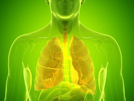 3D rendering accurato dal punto di vista medico illustrazione del polmone di un uomo Archivio Fotografico