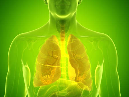 3d rendered medically accurate illustration of a mans lung Stock Photo