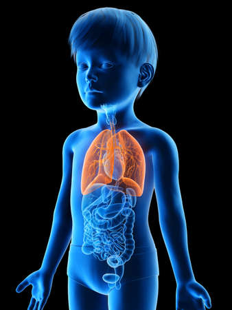 3d rendered medically accurate illustration of a boys lungs Stock Illustration - 123257129