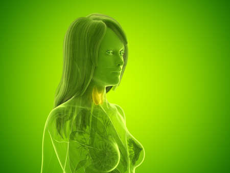 3d rendered medically accurate illustration of a womans thyroid gland