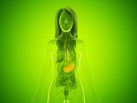 3d rendered medically accurate illustration of a womans stomach 版權商用圖片