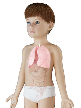 3d rendered medically accurate illustration of a boys lung Stock Photo