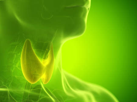 3d rendered medically accurate illustration of a mans thyroid gland