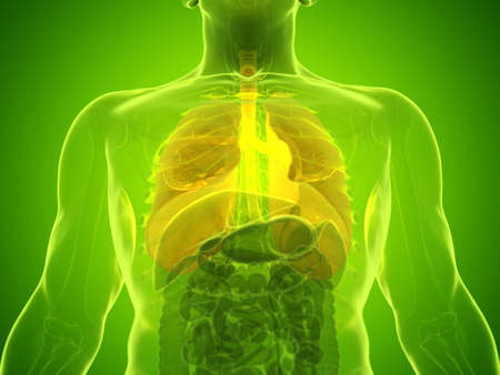 3d rendered medically accurate illustration of a mans lung Stock Illustration - 123253040