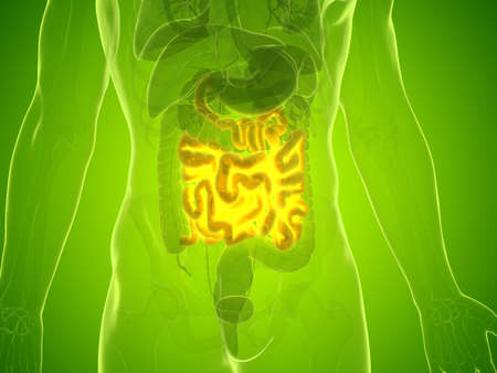 3d rendered medically accurate illustration of a mans small intestine Stock Photo