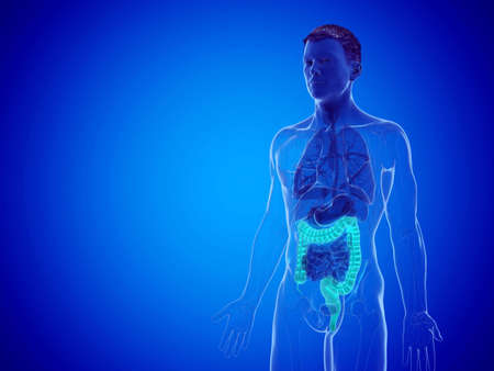 3d rendered medically accurate illustration of a mans large intestine Stock Photo
