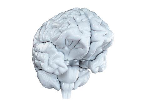 3D gerenderte medizinisch genaue Darstellung eines weißen Gehirns isoliert auf weiß Standard-Bild