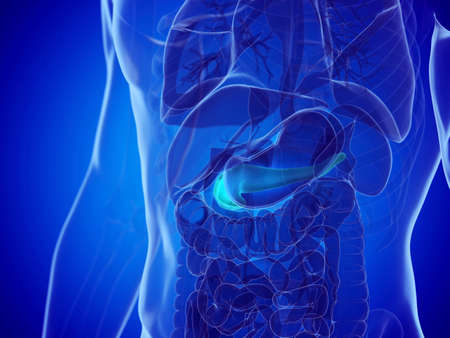 3d rendered medically accurate illustration of a mans pancreas