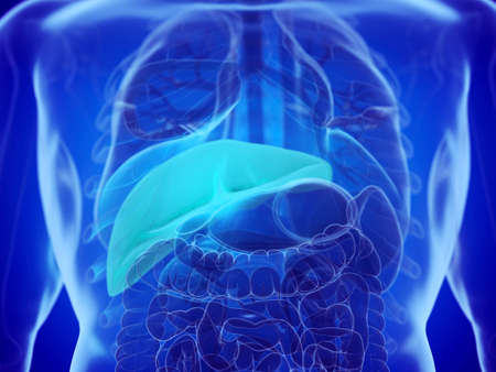 3d rendered medically accurate illustration of a mans liver