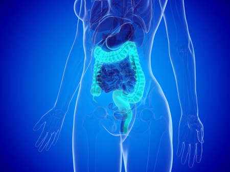 3d rendered medically accurate illustration of a womans large intestine Stock Photo