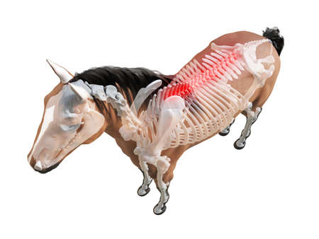 3d rendered medically accurate illustration of the horse anatomy - painful spine