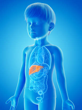 3d rendered medically accurate illustration of a childs liver Stock Photo