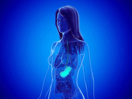 3d rendered medically accurate illustration of a womans stomach Foto de archivo - 123812521