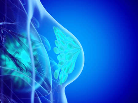 3d rendered medically accurate illustration of a womans mammary glands