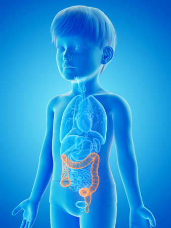 3d rendered medically accurate illustration of a childs colon Stock Photo