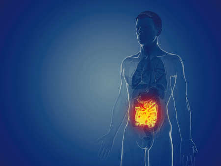 3d rendered medically accurate illustration of a mans small intestine