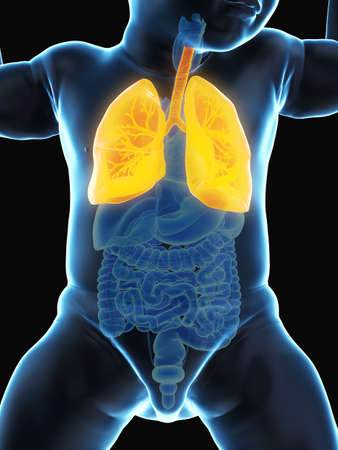 3d rendered medically accurate illustration of a babys lung