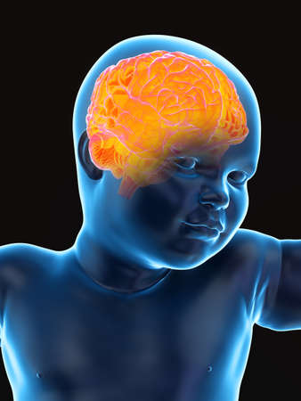 3d rendered medically accurate illustration of a babys brain Stock fotó