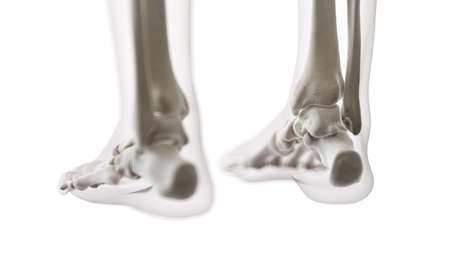 3d rendered medically accurate illustration of the foot bones Stock Illustration - 125138313