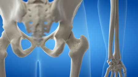 3d rendered medically accurate illustration of the human hip
