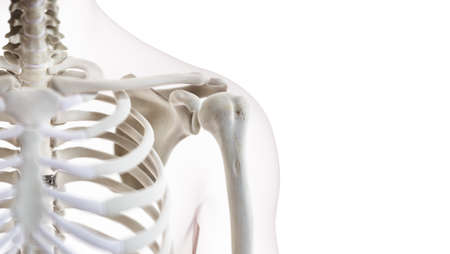 3d rendered medically accurate illustration of the shoulder joint