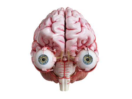 3d rendered medically accurate illustration of a human brain, eyes and arteries Stock Photo
