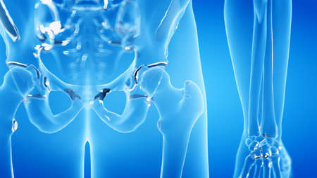 3d rendered illustration of the human, skeletal hip joint