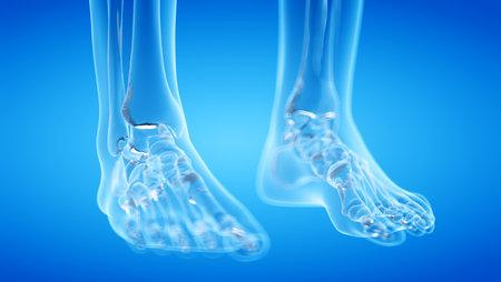 3d rendered illustration of the human, skeletal foot
