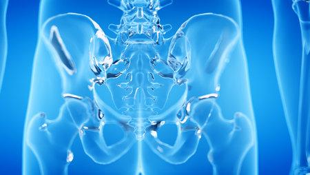3d rendered illustration of the human, skeletal sacrum