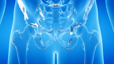 3d rendered illustration of the human, skeletal hip Stock Photo