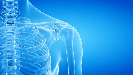 3d teruggegeven illustratie van de menselijke, skeletachtige schouder