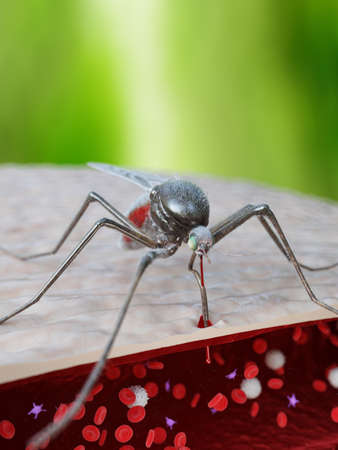 3d rendered illustration showing the sting of a mosquito penetrating a human artery Stock Illustration - 125551090