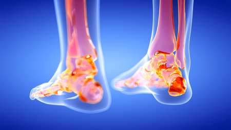 3d rendered illustration of the human, skeletal ankle Stock Photo