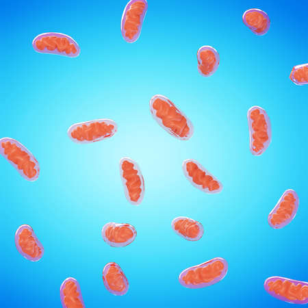 3d rendered illustration of mitochondria Stock Photo