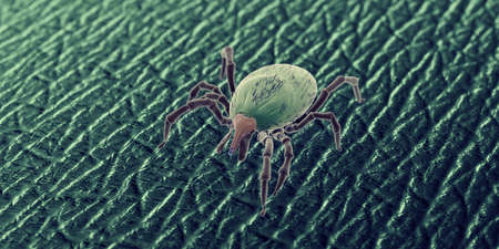 3d rendered illustration of a tick on human skin, sem style