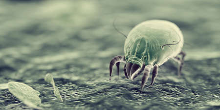 3d rendered illustration of house dust mites Фото со стока